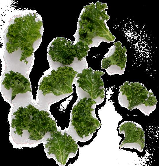 Frunze de Kale rupte în bucăți